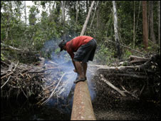 Logger cuts log in Riau forest, Nov 07