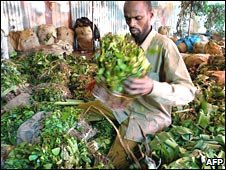 Ethiopian khat trader