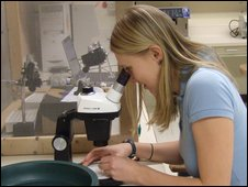 Co-author Lauren Cator preparing her mosquitoes for auditory recordings