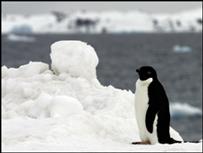 Пингвин на побережье Антарктиды