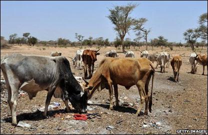 Пастбище во время засухи, Сенегал