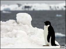Penguin on ice, Antarctica