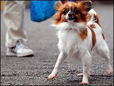 Tsu-chan, a rental dog out for a walk in Tokyo (Photo: Alfie Goodrich)