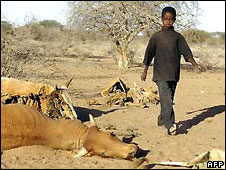 A young herder in Kenya walks past dead cattle in the north-east in 2006