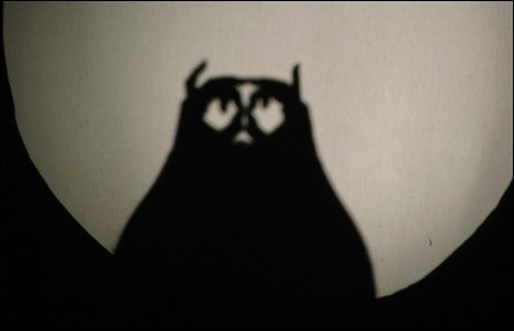 Owl shadow