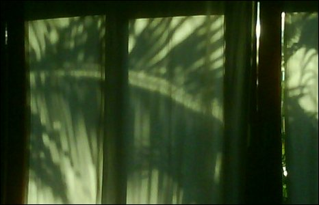 Leaf shadows on a curtain