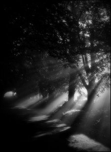 Trees cast shadows in the sunlight