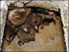 Natterer's bats using a bat box (Pic: Derek Smith)