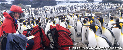 Dana Bergstrom con los pingüinos de Macquarie.
