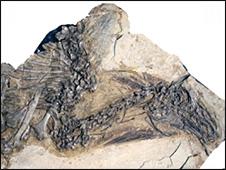 Dinosaur fossil (PNAS)