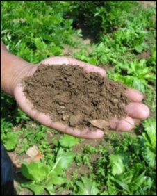 Soil, Malawi