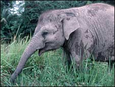 Elephant. Image: Christy Williams, WWF