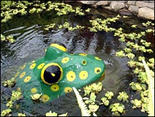 Winter Gardens frog pond [Pic: Aberdeen City Council]