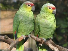 Parrots at Chester Zoo