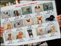Perros de alquiler (Foto de Alfie Goodrich)