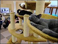 """Felino en un """"Gato-Café""""."""
