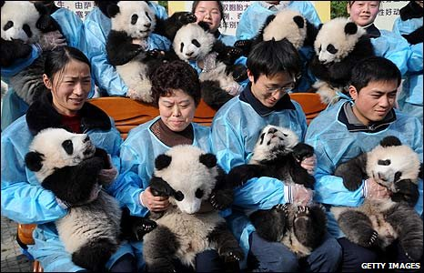 Pandas with their carers in Chengdu, Sichuan province, China