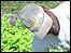 Agricultor en el semi-árido brasileño  (Foto: gentileza ASA)