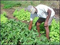 Agricultor en el semi-árido de Brasil  (Foto: gentileza ASA)