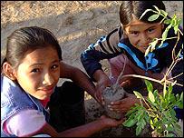 Niñas en Perú plantando un árbol de huarango Experta de Kew con una planta tropical (Foto: gentileza Kew Gardens)