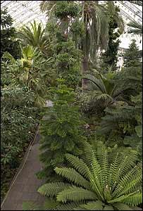 Interior de Palm House, invernadero en Kew Experta de Kew con una planta tropical (Foto: gentileza Kew Gardens)