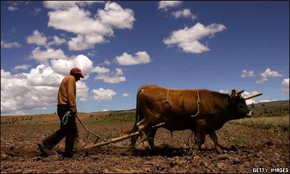 Campesino boliviano arando la tierra