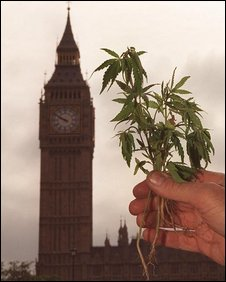 Cannabis plant outside Parliament