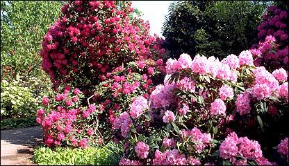Kew Gardens, Jardín Botánico de Londres (Foto: gentileza Kew Gardens)