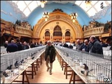 Racing Pigeon Show of the Year