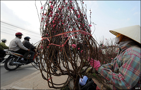 A woman sells peach blossom in Hanoi, Vietnam