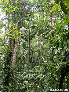 Secondary growth rainforest (Image: Robin Chazdon)