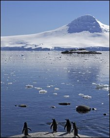 Gentoo penguins (file photo)