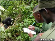 Wildlife rangers carrying out the census (Gorilla.CD)