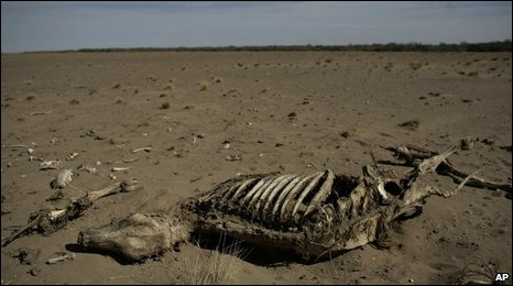 A cow's skeletonin Stroeder, Argentina, on 19 January 2009