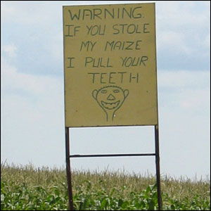 "A sign in South Africa by a maize field reading, ""Warning, If you stole my maize, I pull your teeth""   (Photo: BBC News website reader Stuart Schaum)"