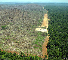 Amazon deforestation (file pic)