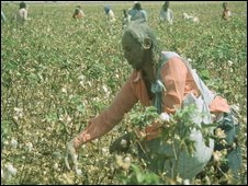 cotton picker in Sudan