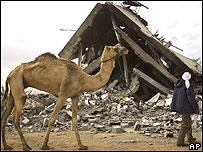 Palestino con su camello