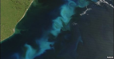 Plankton bloom off Argentina