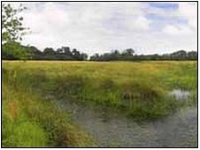 Sutton Fen