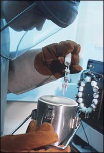 Un especialista maneja �vulos para t�cnica reproductiva