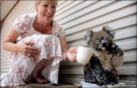 An Adleaide woman gives Buster the Koala a drink of water
