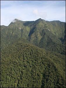 Forest on Mount Bovasi (Image: J.Keeling/BBC)