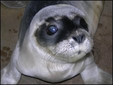 One of the rescued seal pups