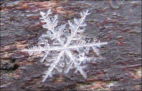 Kevin Gilman's snow crystal