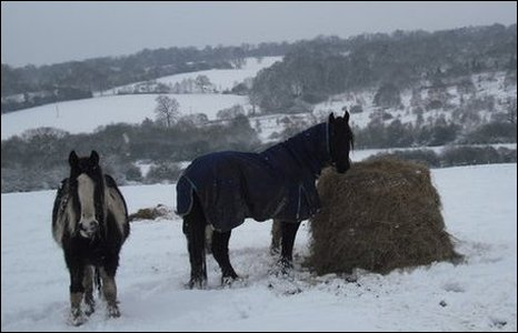 horses in the snow in Middlesex