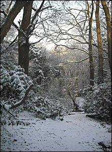 Bassett Green village - pic Sarah Dunlop