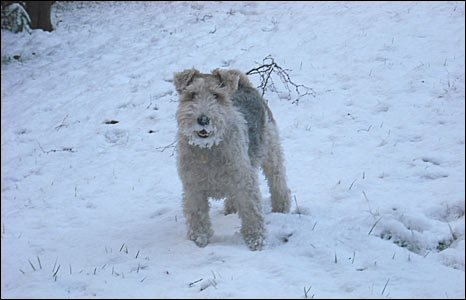 Rathbone the dog in the snow at Bassett Green - pic Sarah Dunlop
