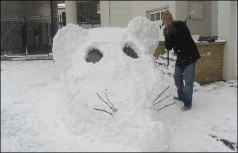 A snow mouse. Photo: Andy Connolly