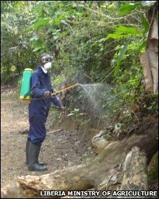 Ministry of Agriculture workers spraying insecticide on trees